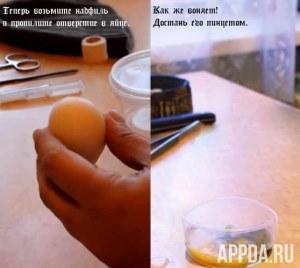 Как сделать гомункула в домашних